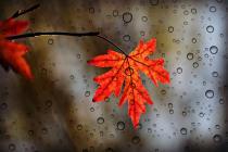 الخريف على الأبواب: أجواء غائمة وإنخفاض على درجات الحرارة